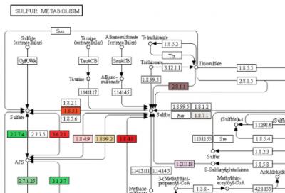 kegg_pathway_sulfur